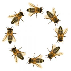 SW FL- Bees